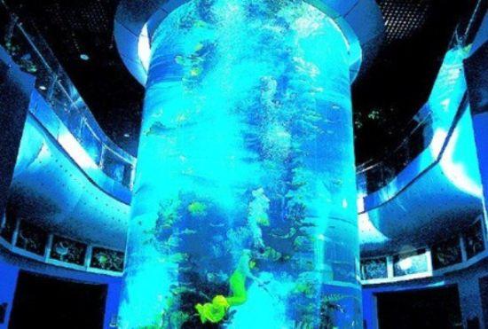 海洋孕育万物之青岛海产博物馆