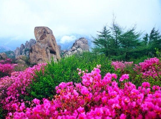 崂山巨峰游览区赏花线路