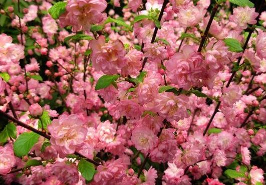 青岛赏花好去处之中山公园
