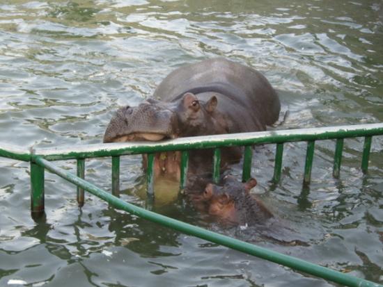 感受大自然 黄岛野生动物园穷游攻略_青岛微生活旅游