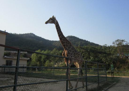 黄岛野生动物园穷游攻略