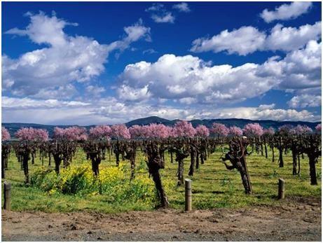 匈牙利葡萄酒产区风景图
