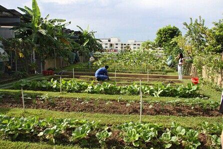 菜园地景观设计