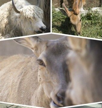 青岛动物园与中山公园为伴